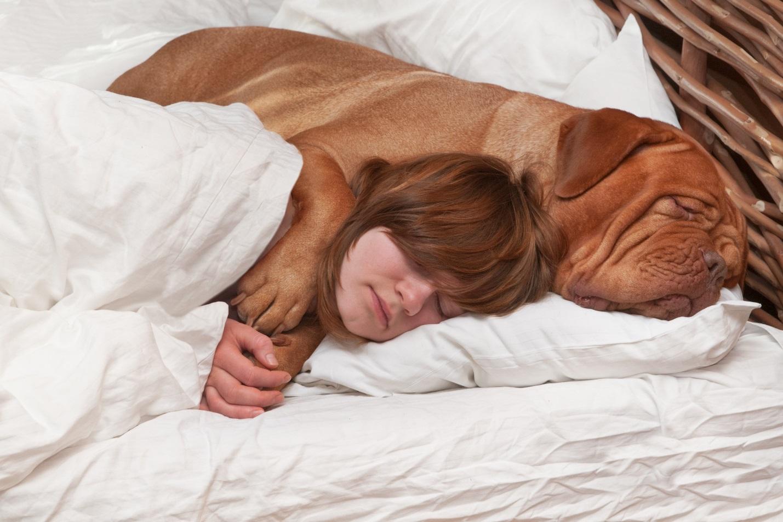 Можно ли спать с животными в одной кровати